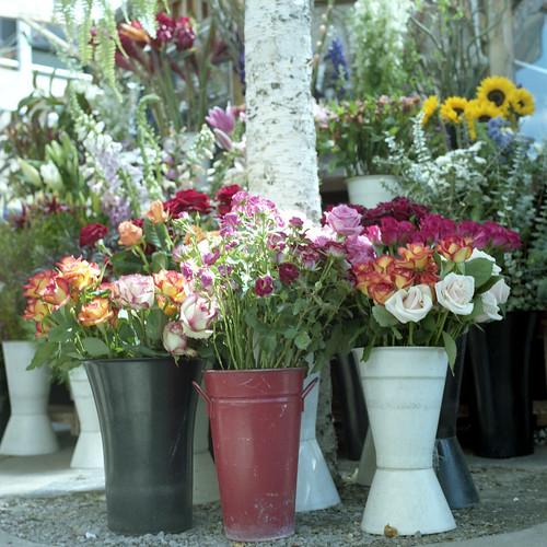 ???//365 : flower stand