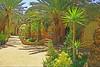 (769) Oase Siwa / Oasis Siwa (unicorn 81) Tags: voyage africa travel color sahara trekking geotagged hotel sand colorful desert northafrica egypt palm adventure oasis egyptian egipto 2009 ägypten egitto excursion egypte reise egypten rundreise roundtrip egipt égypte mapegypt misr nordafrika egypttrip siwaoasis april2009 ægypten aegyptus αίγυπτοσ ægyptusintertravel ägyptenreise schulzaktivreisen meinjahr2009