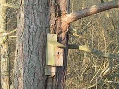 IMG_0028 (ksafranb) Tags: woods sweden vnern vstergtland surbokskog sur