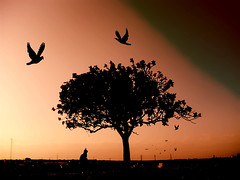 Are you always gonna be there when I grow up? (Mouin.M) Tags: sunset red sky orange pets tree strange silhouette sepia cat dark hope mood alone loneliness darkness pigeon gothic wires lonely crow tenderness feelings sympathic onblack sweetdreams micartttt