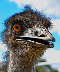 Eyeballed by an emu (macroMe) Tags: blue portrait sky orange colour eye art clouds photoshop nikon emu blend d90 365dpsassignment dps365