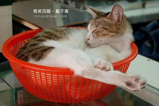 Cat。大紅籃子。踢腿貓02