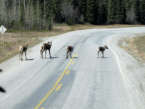 Alaskan Drive -Day 9-24