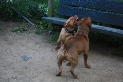 Dog Rape 6 (Venessa Nina) Tags: dog dogs photography idea bad run rape queens breeding stupid mating nina idiots dogrun morons pitbulls venessa fivefootmohawk venessaninaphotography