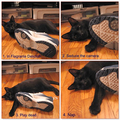 What to do if you are caught humping a shoe: (HarrietSpy) Tags: cat dresden kitty instructions picnik themoreyouknow