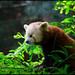 Endangered Animals: A Third Grade Pathfinder