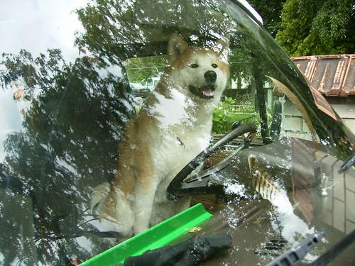 lol dogs :)