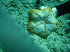 We picked up the big starfish