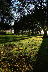 LIGHT . SHADE (Arte Lee) Tags: park light sunset shadow plant macro tree green nature leaves canon leaf lawn taiwan shade taipei   sod    greensward