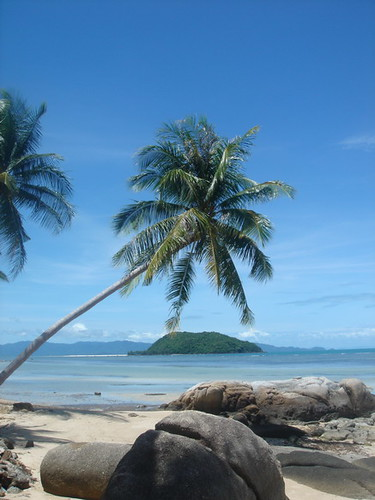 Palm tree on Ao Plaay Laem, Ko Pha Ngan