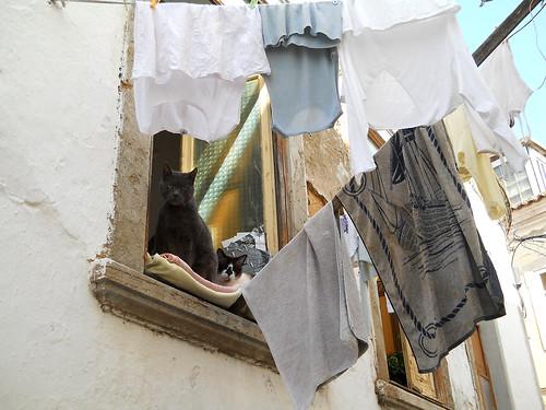 cats in Faro