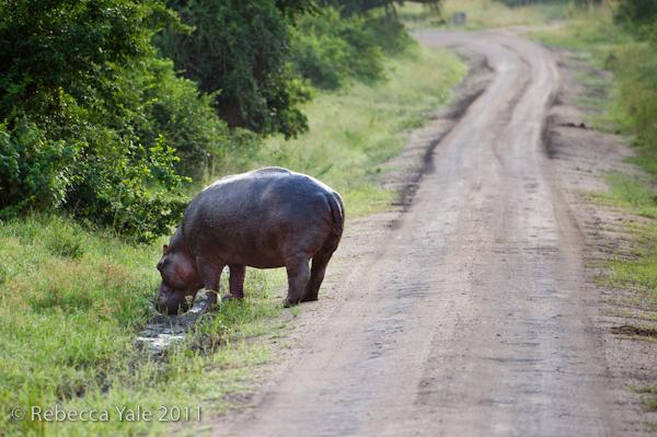 RYALE_Rwanda_Uganda_Safari-288