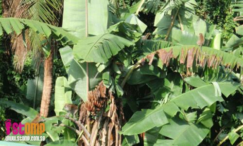 Monkeys chat and enjoy handpicked bananas at Toh Tuck