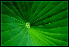 """Green"" (flutemumof3(I'm back)) Tags: nc floraandfauna sarahpdukegardens"