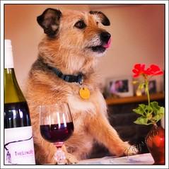 Lip smacking good (KrysiaB) Tags: red dog bottle yum wine delicious licking themetitletagyoureitseecpsgroup