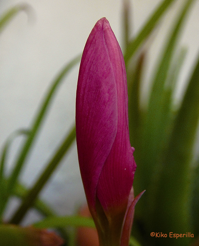 Erótica vegetal