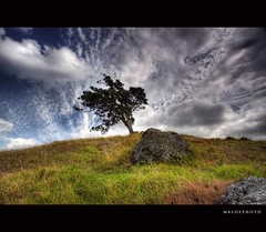 Wild cloud (Mark Emirali) Tags: blue newzealand cloud tree green nature canon skyscape landscape nz 1022mm hdr lonelytree 30d copyrighted canon30d crazycloud pleasedonotusewithoutmypermission maloe4 bitoverthetop maloephoto maloephotography markemirali