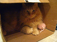 Jasper in the box