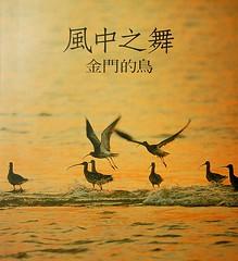 風中之舞-金門的鳥