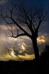 Standing Still (Firdaus Mahadi) Tags: sky cloud sun tree nature silhouette clouds sunrise evening nikon ray skies fisheye malaysia nikkor awan kajang selangor langit rayoflight matahari pokok rof semenyih petang dahan nakedtree matahariterbenam affisheyenikkor105mmf28 alamsemulajadi pokokmati bandarteknologikajang firdausmahadi firdaus