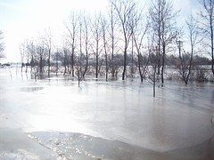 Front yard iced over (legallyglinda) Tags: flood 2009 westfargo sheyenneriver