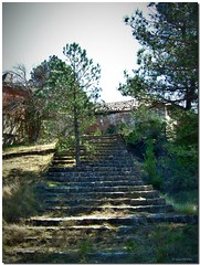 The pine and the stairs / El pino y las escaleras (SantiMB.Photos) Tags: camp espaa tree abandoned spain military calafell staircase militar rbol catalunya campamento hdr tarragona escaleras baixcamp abandonado blueribbonwinner tonemapping singleraw castillejos lock06 enfoca arbol theunforgettablepictures multimegashot