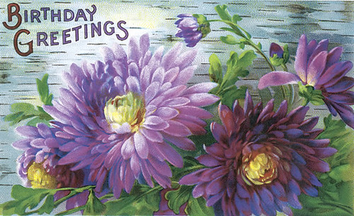 purple aster b-day greeting
