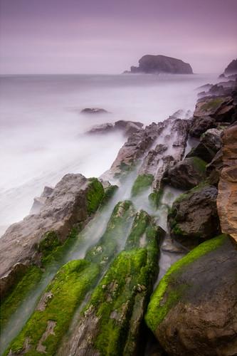 Verde y mar en la Playa de Arnía