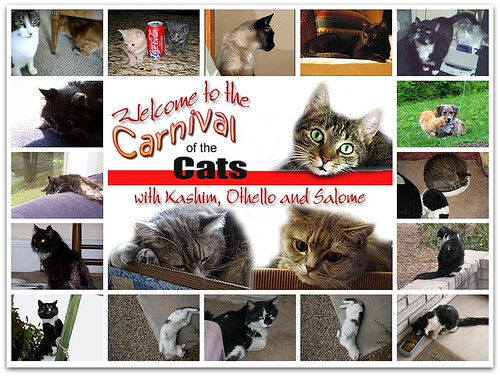 Carnival of the Cats #272