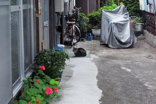 Today's Cat@20090610