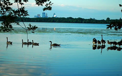 lake harriet geese skyline