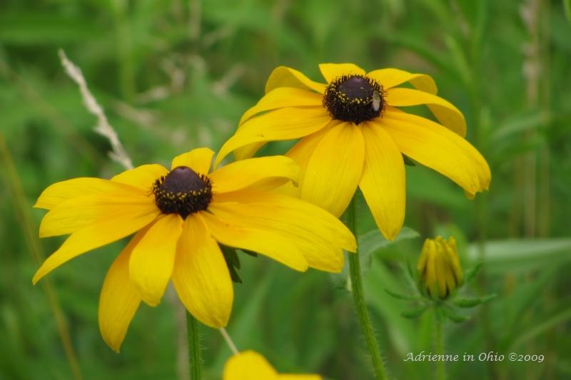 prairie wildflower photo by Adrienne Zwart