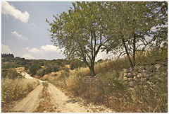 Kritou fields (-Filippos-) Tags: road rural landscape countryside village cyprus fields paphos kritou marottou