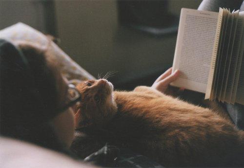 catreading