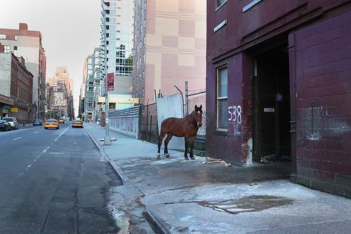 1000horse