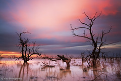 Sunset at Menindee Lakes, Outback NSW, Australia (-yury-) Tags: sunset sky cloud tree water landscape lakes australia nsw outback brokenhill  darlingriver menindee  supershot  abigfave pamamaroo