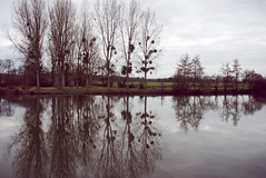 Reflections in river Sarthe (Felix van de Gein) Tags: france europa europe frankrijk february loire 2009 lafrance sarthe paysdelaloire avoise