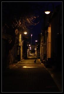 Chats dans la nuit.