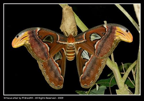 Los Insectos Mas Grandes Del Mundo