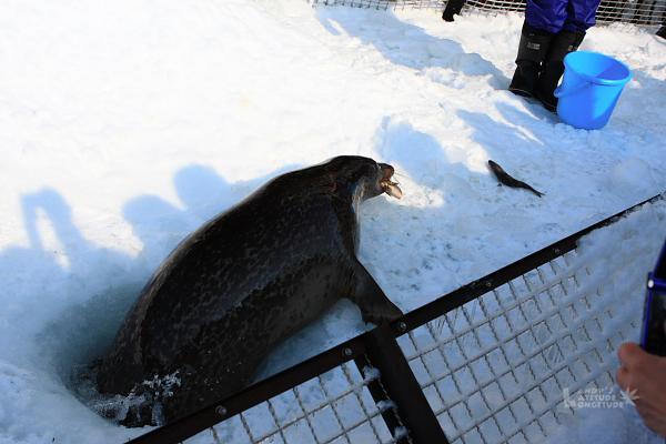 2009北海道-D5-3-旭山動物園_67.jpg
