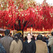 008hbeijing -- carla with bright red new years tree