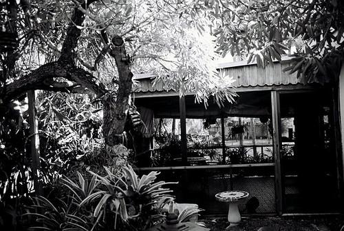 Backyard Miami Style