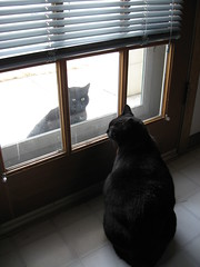 IMG_6496 Indoor cat and outdoor cat