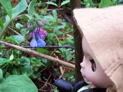 mertensia virginica (Sky Haramori / Betsy Honeyvenom) Tags: nature blythe mrb mademoisellerosebud fauvette