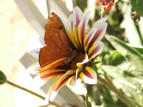 Butterflies at the Desert Botanical Gardens