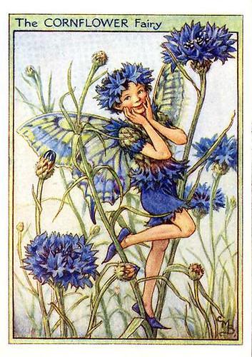 001-cornflower_flower_fairy