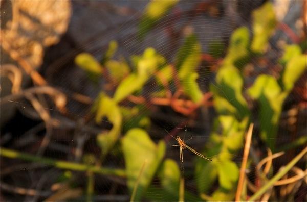 spider_0348