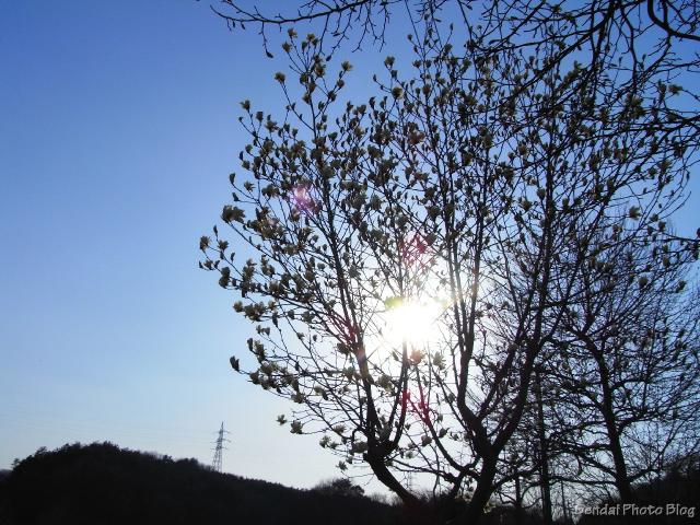 Sun Through The Magnolia Tree