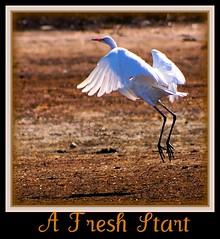 20090331_293 a fresh start.......... (vivshots2008) Tags: birds wings action takingflight dragondaggerphoto
