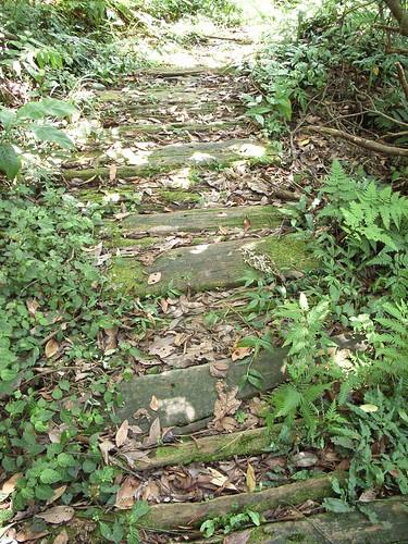 這一段的木頭步道走起來很舒服